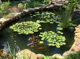Keeping your fish pond healthy   Aquaplancton: 01298 214003  Pond