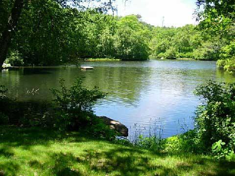 Your Pond in Summer   Aquaplancton: 01298 214003  Pond